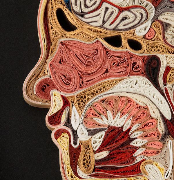 Aprenda anatomia com a técnica do 'paper quilling', pela mão de Lisa Nilsson